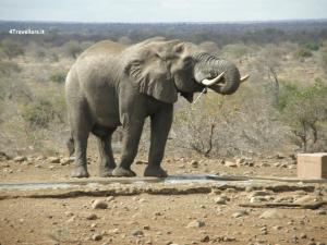 South Africa: safari to Kruger National Park