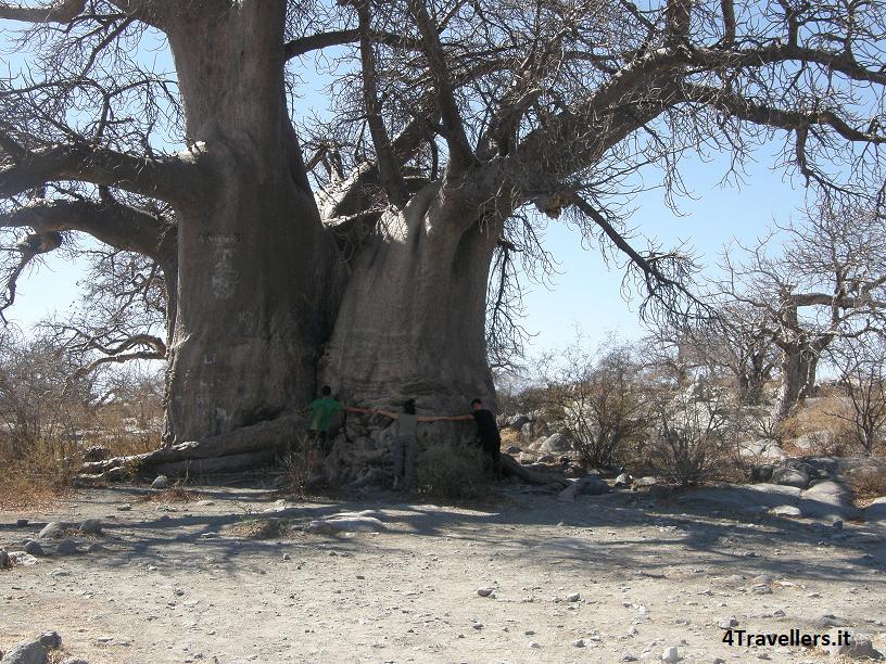 Kubu Island - Baobab