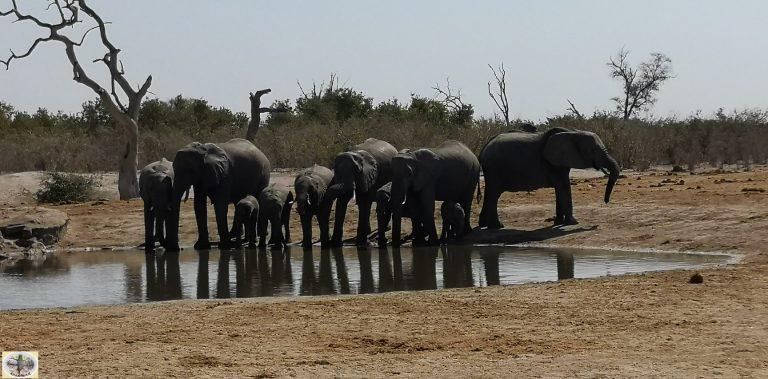 Botswana - Elefanti al Chobe National Park
