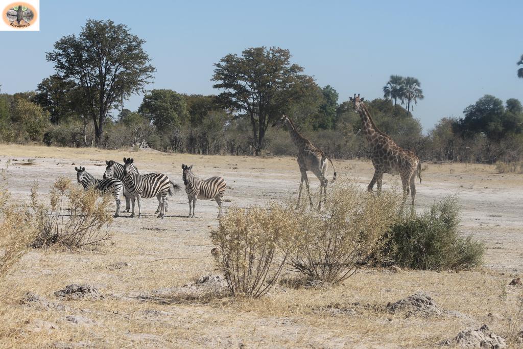 Botswana - Moremi Game Reserve