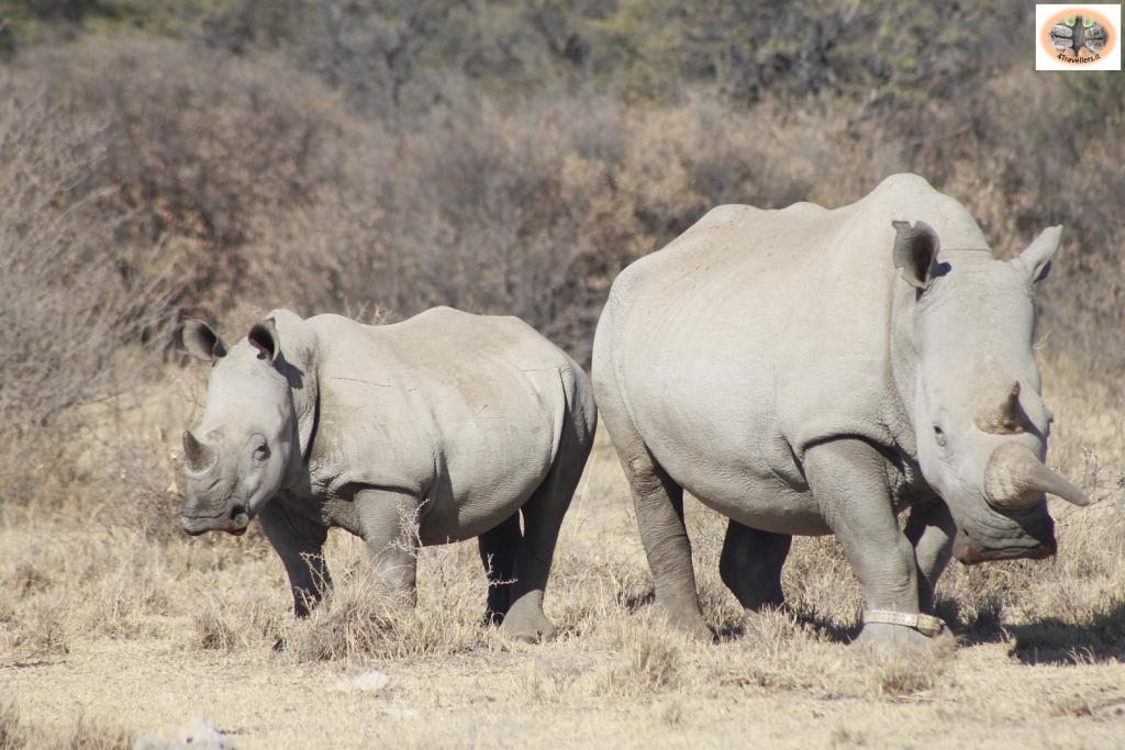Botswana - Khama Rhino Sanctuary