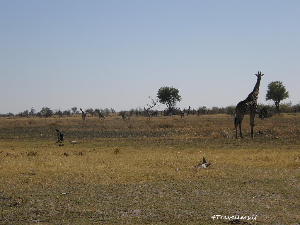 Okavango Delta - Mokoro
