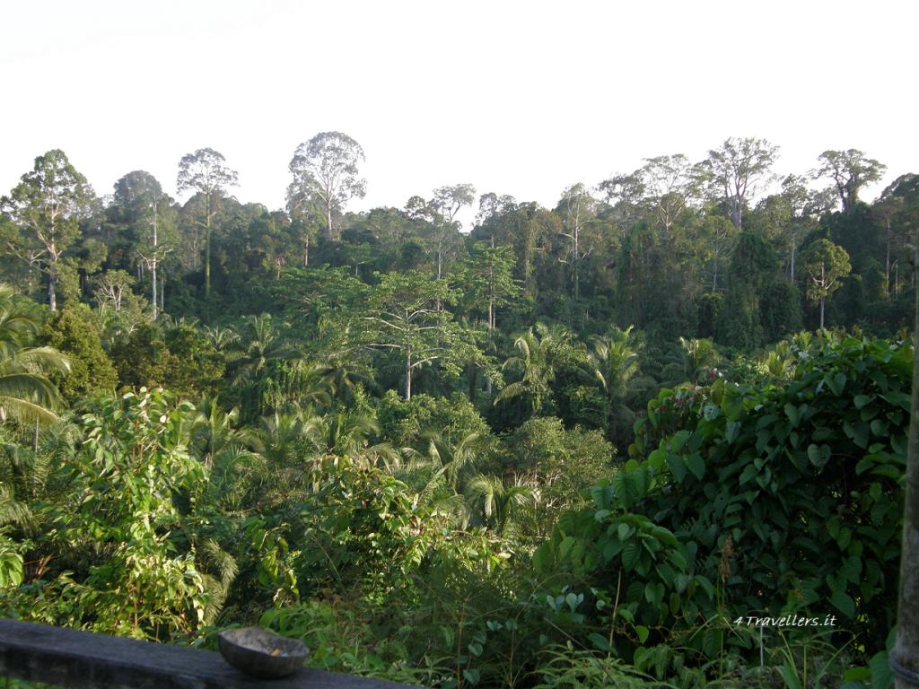 Paganakan Dii - Borneo