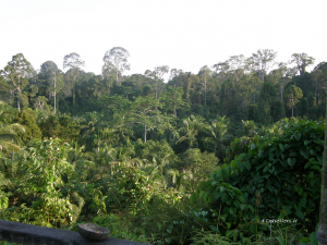 APPEAL FROM THE BORNEO RAINFOREST