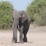 Chobe National Park – DYI safari in the most spectacular park in Botswana